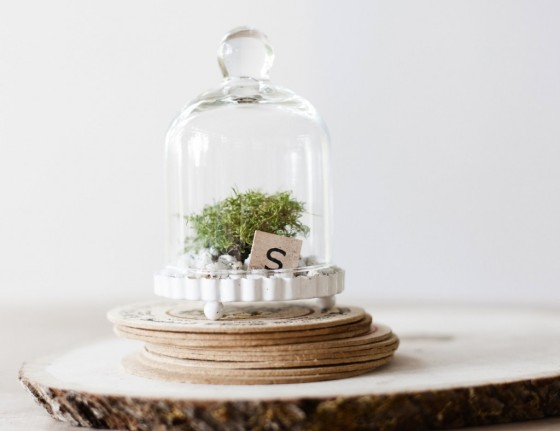 Miniature-Cloche-Bell-Jar-Terrarium-by-Hammers-and-Heels-at-CustomMade.com_-1024x789